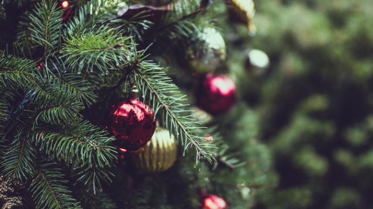 christmas-tree-768x432-1.png